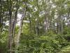 天水山付近のブナ林