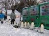 ペンギンの散歩・旭山動物園