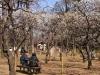 梅の羽根木公園