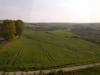 トルコの麦畑
