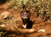 高川山山頂犬